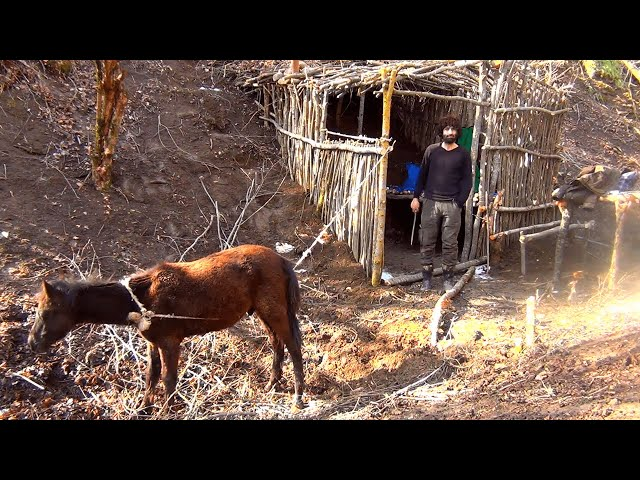 Bushcraft building underground cabin, how to get water from tree, cooking chicken