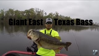 Video Sight Fishing for Double Digit Bass download MP3, 3GP, MP4, WEBM, AVI, FLV November 2018