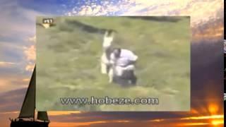 Животный секс   Funny Animal Sex    видео с животными