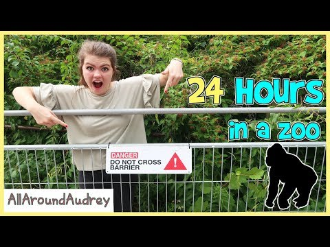 24 Hours In A ZOO / AllAroundAudrey