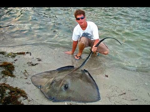 Saltwater fishing for monster stingrays youtube for Is a stingray a fish