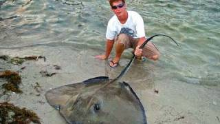 Saltwater Fishing for Monster Stingrays