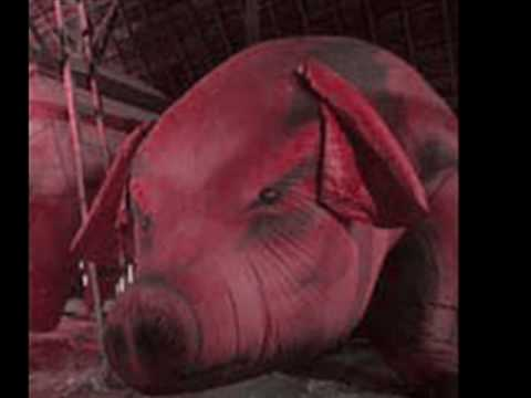 Pink Floyd - Pigs (Three Different Ones)
