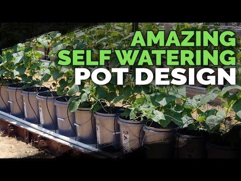 download Best Self Watering Pot Design I've Seen Yet!