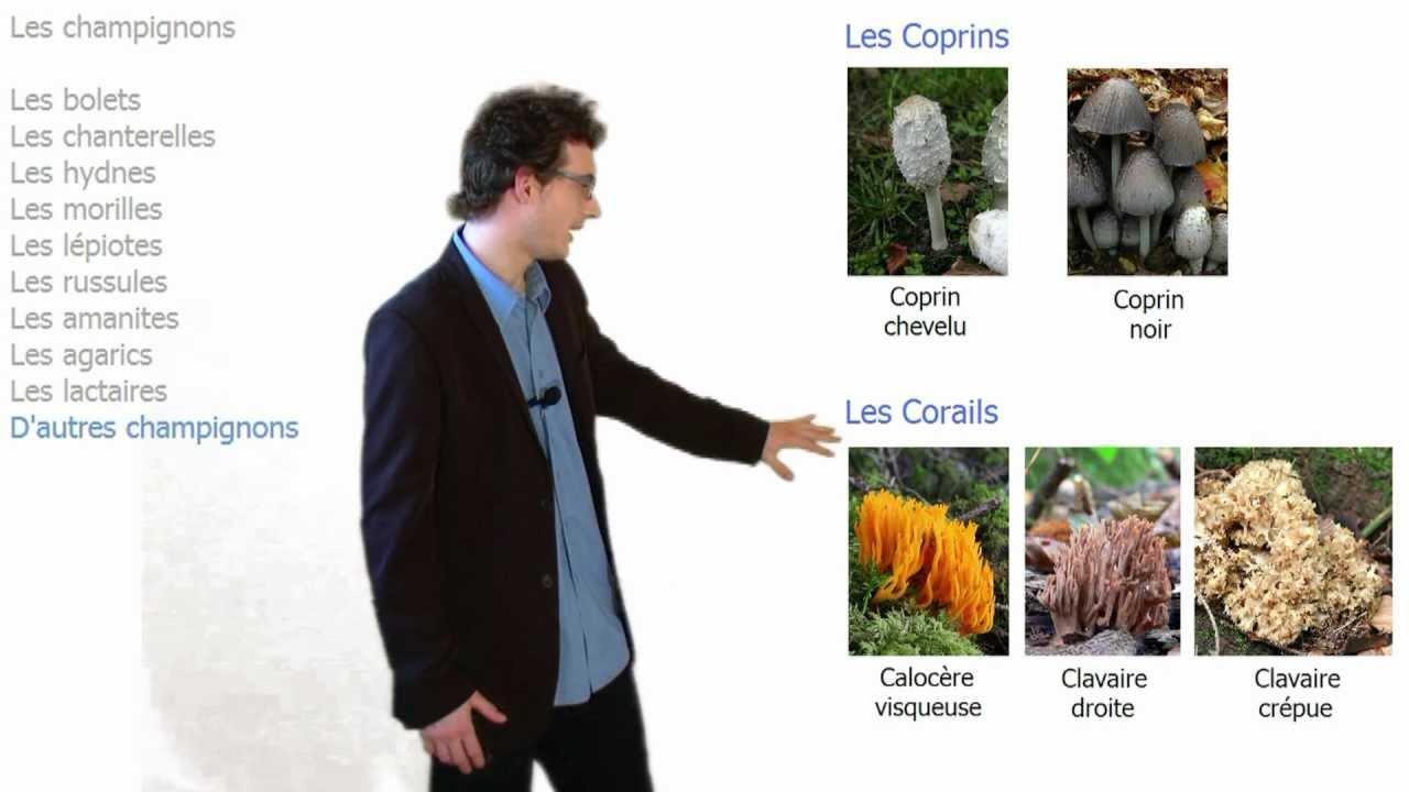 Identifier les champignons