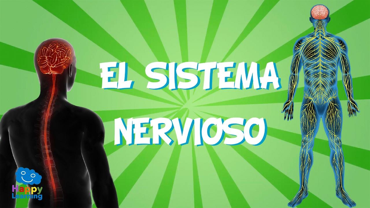 El Sistema Nervioso   Videos Educativos para Niños - YouTube
