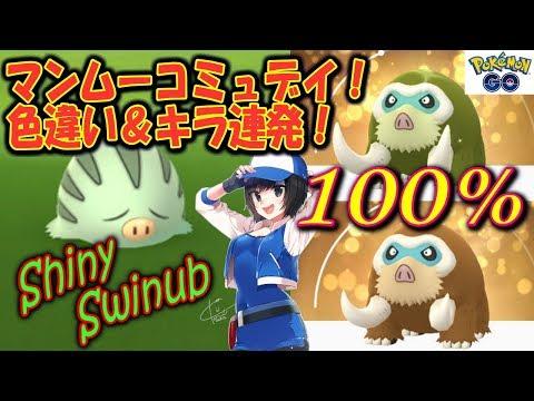 マンムーコミュデイ!色違い&キラ連発!Shiny Swinub Pokémon GO thumbnail