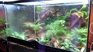 Frog Room Tour- Showcasing Plants of the World