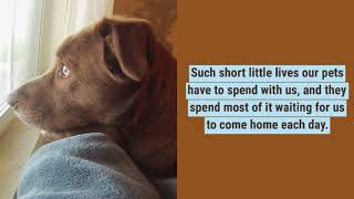 Such short little lives our pets have to spend with us...