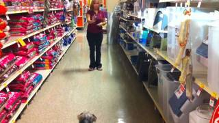Snoopy During His Dog Training At Petsmart