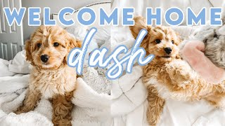 WE GOT A PUPPY! WELCOME HOME DASH! Baby Cavapoo!