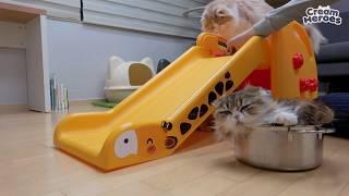 고양이들이랑-컬링을-해보았어요