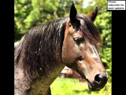 Marsh Tacky Horse   Horse Picture Ideas