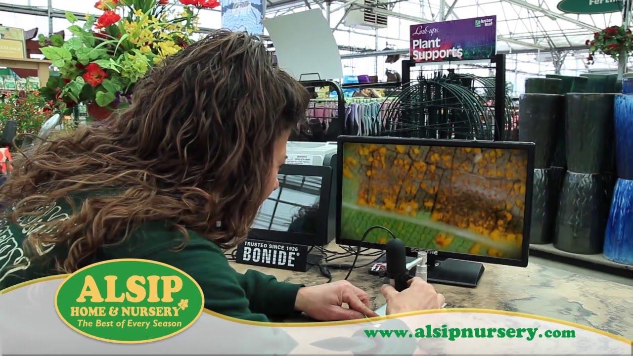 Flower And Garden Show At Alsip Home Nursery