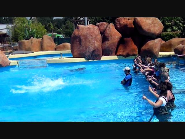 Reserver rencontre avec les dauphins marineland