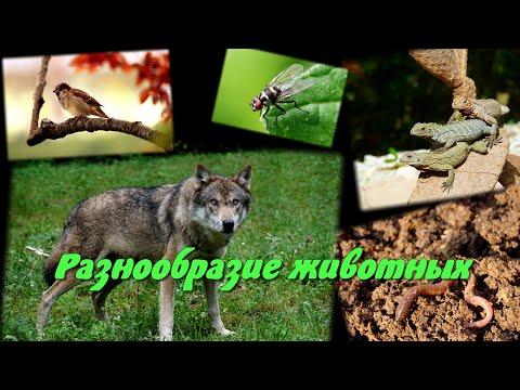 Разнообразие животного мира видеоурок