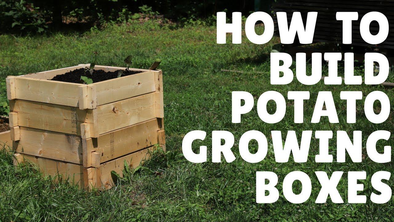 Diy How To Make Potato Growing Boxes Youtube