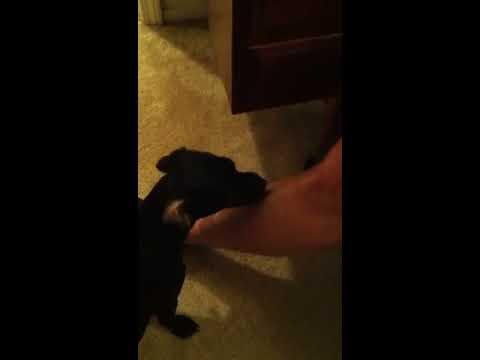 How To Make A Cream For Dog Elbow Calluses