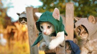 Котята-ассасины(Ещё никто не уходил от отряда пушистых ассасинов! Подпишись на новые видео ▻ http://bit.ly/mrtvcow ✪ English version ▻ http://you..., 2014-09-26T13:38:39.000Z)