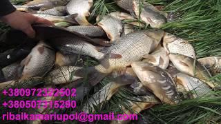 Рыбалка возле Мариуполя Выпуск 19