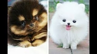 Cute cat and dog funny videos 2018   FunnyAnimals