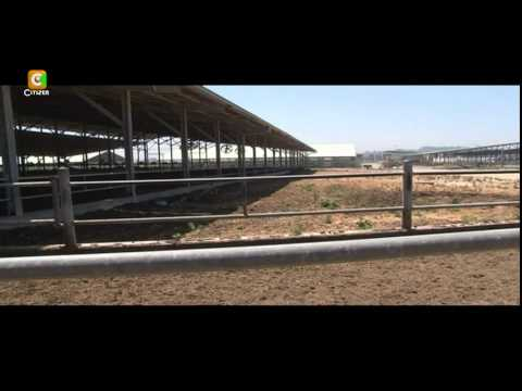 Smart Farm - Dairy Farming In Israel