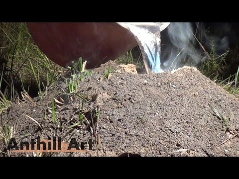 Largest Aluminum Fire Ant Colony Cast So Far (Cast #072)