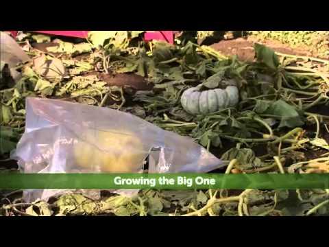 Hallmark Channel - Growing The Big One