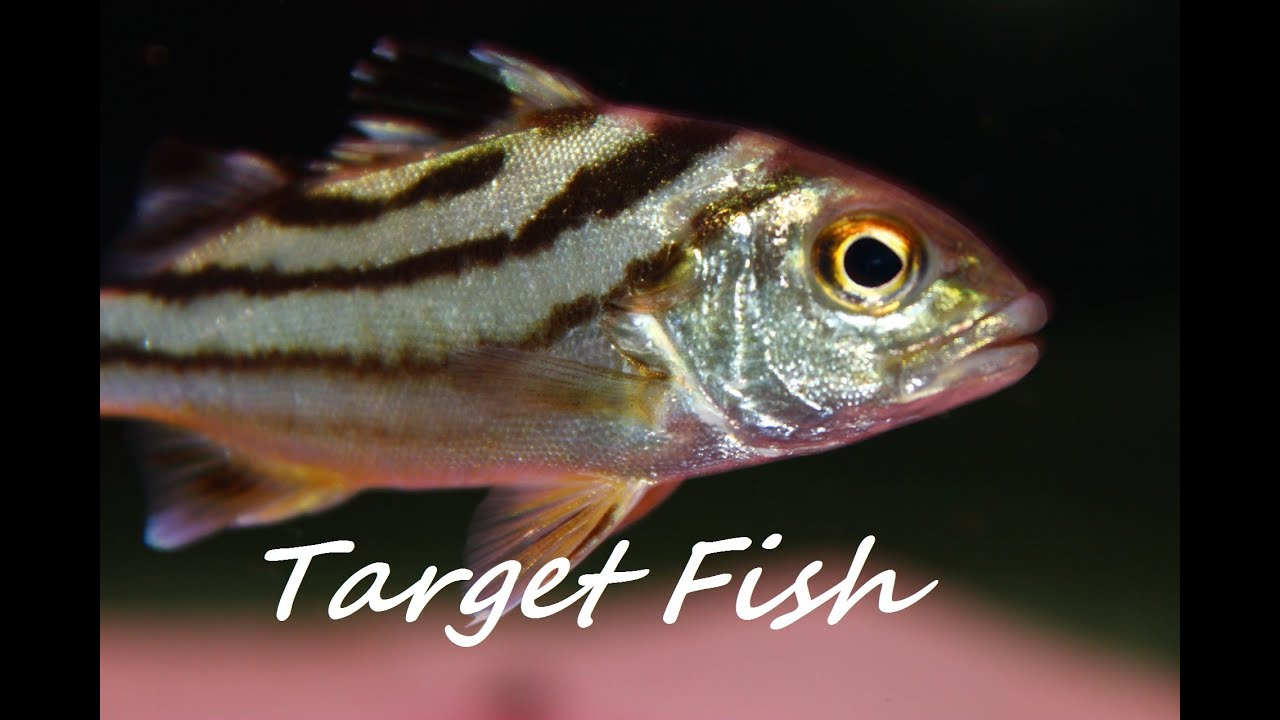 Tropical fish brackish water youtube for Brackish water fish