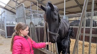 Faya comes up with a name for this filly! Friesian Horses.