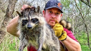5 Days Alone at Bugout Camp - Day 2 - Catch and Cook Wild Raccoon