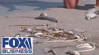 Red tide slams Florida businesses