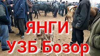 2019 Янги Мол Бозор нархлари