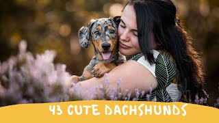 43 Cute and Funny Dachshund Videos Instagram | Adorable Sausage Dogs