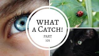 What a Catch! Part 101- A Miraculous Ladybug Fanfiction