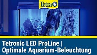 Tetronic LED ProLine | Für ideale Lichtverhältnisse in Ihrem Aquarium