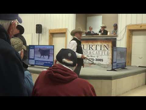 Curtin Angus Cattle Auction