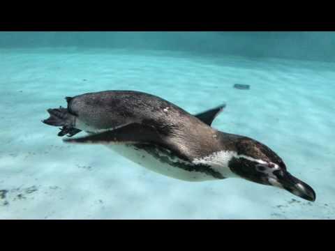 The Novosibirsk ZooPark 2017 - Новосибирский ЗООПАРК имени Р.А. Шило