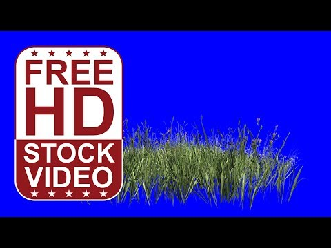 FREE HD video wild flowers with wind effect on blue screen 3D animation