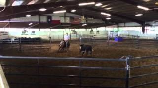 Gus- Jared Lesh cowhorses