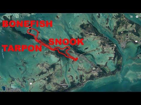 Sugarloaf Key Recon - Tarpon, Snook, Bonefish, And Sawfish