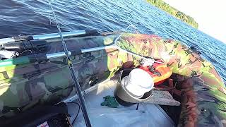 Рыбалка на сомов с лодки в отвес с квоком