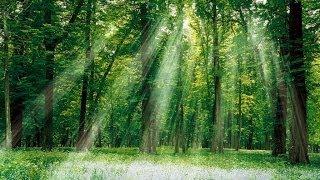 Transcendance | Original composition | Musique de film