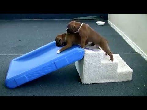 Dog Loves Going Down Giant Slide Into Lake Doovi