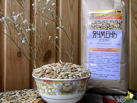 Зерно ячменя - польза, применение, свойства и противопоказания ...