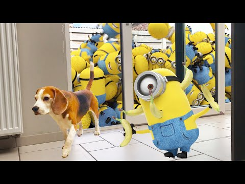 Minion Stuart Pranks my Dogs with a FARTGUN! Funny Dogs Louie & Marie
