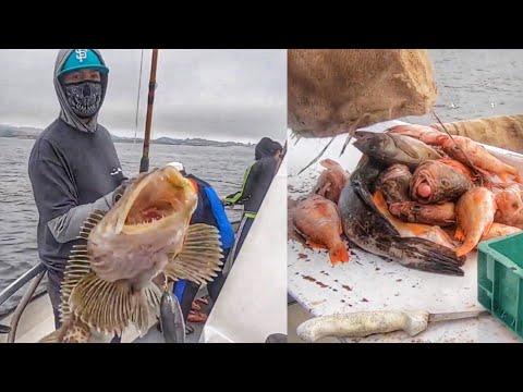 Deep Sea Fishing | Stagnaros Charter | Santa Cruz, CA  (Lingcod & Rock Cod)