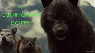 Я одинокий волк-Клип про волка