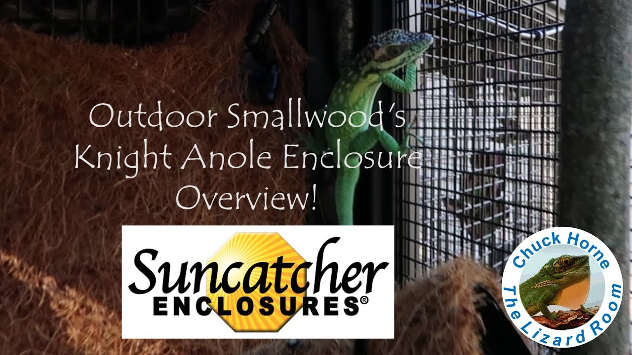 Outdoor Smallwood's Knight Anole Enclosure Overview
