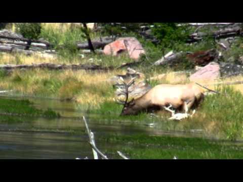 3. Yellowstone - Wild Life